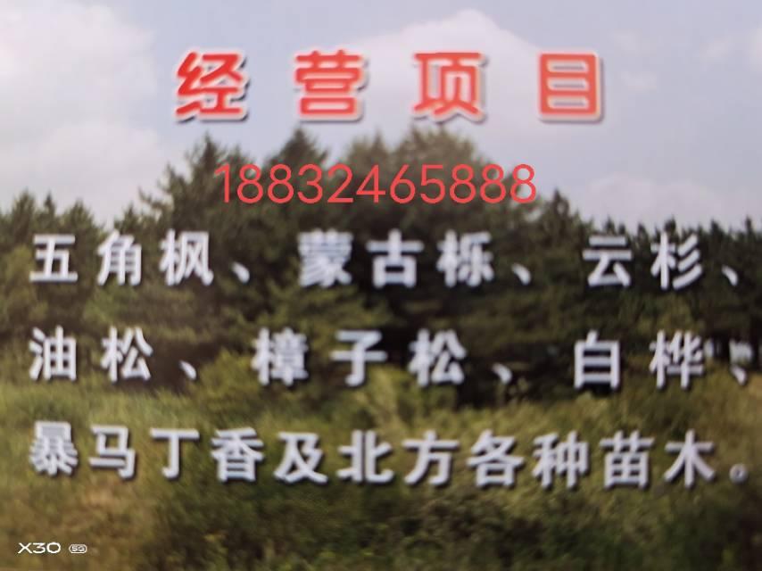 圍場滿族蒙古族自治縣興業苗木基地