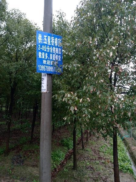 宁波慈城绿野苗木基地