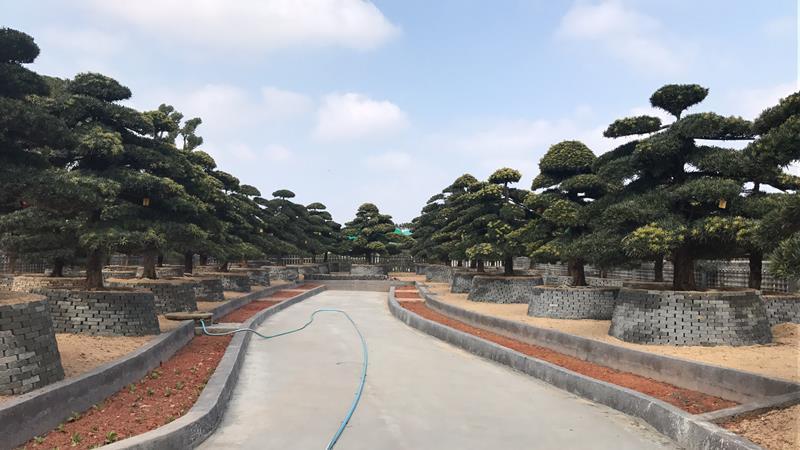 浏阳市鸿诚苗木种植专业合作社