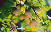 引用 世界卫生组织推荐的21世纪十大健康食品(转) - moshuangle - moshuangle的博客