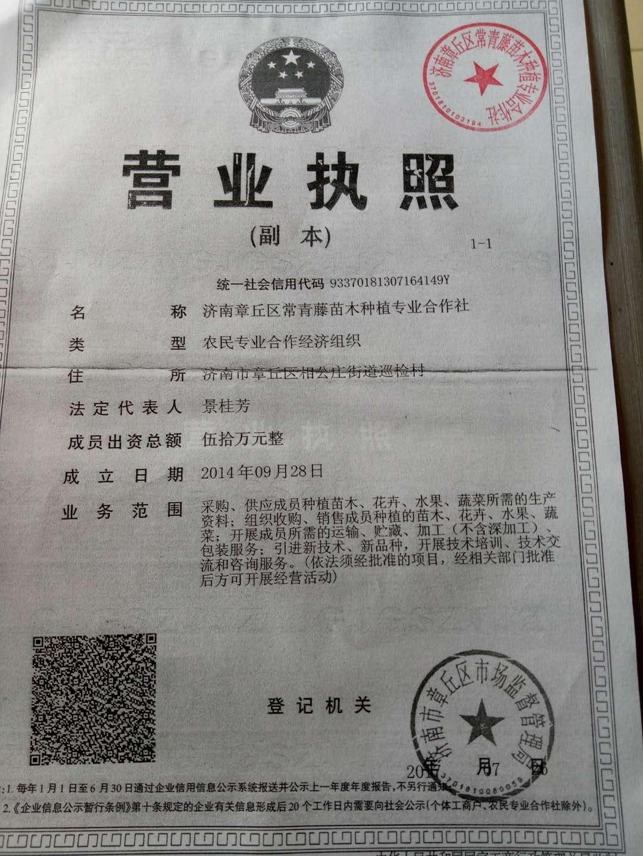 济南章丘区常青藤苗木种植专业合作社