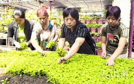 乌鲁木齐经济技术开发区满园春园林花卉