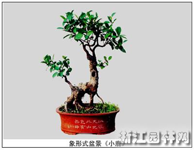 >> 正文       象形式盆景是用植物模仿古今人物,大自然中的各种动物