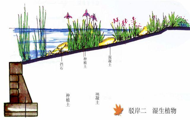 睡莲叶横切面结构图