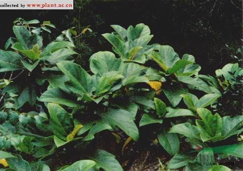 植物生长步骤大图