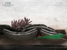 塔花瓦松 塔形景天(拉汉种子植物名称)