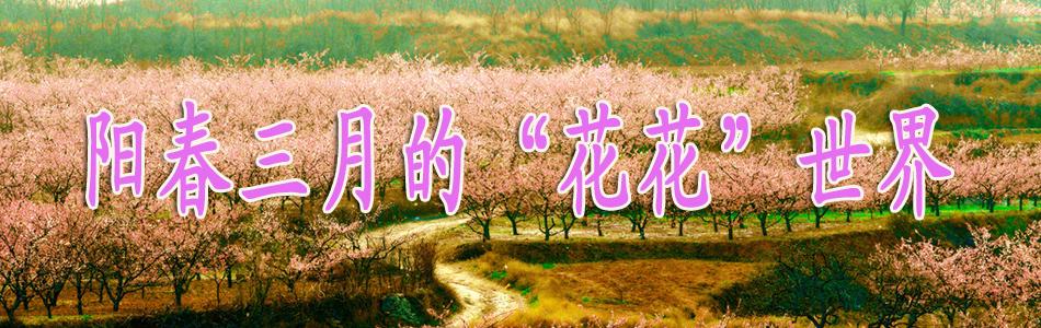 阳春三月 - 夏日晚风 - 夏日晚风的博客